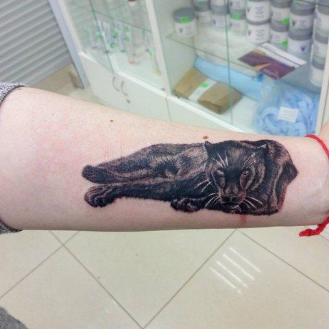 Татуировка пантеры на предплечье