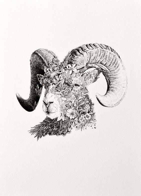 Рисунок Овна из Полевых Цветов